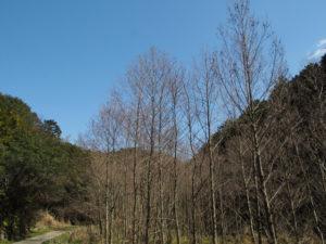 国道42号から林道の先の湿地を抜けて粟皇子神社(皇大神宮 摂社)へ