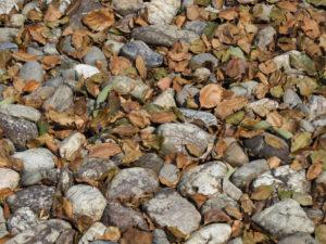 落ち葉の清掃が大変、神服織機殿神社(皇大神宮 所管社)