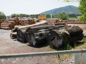 神宮司廳の貯木場で見かけた滝原スギの古木(伊勢市岡本)