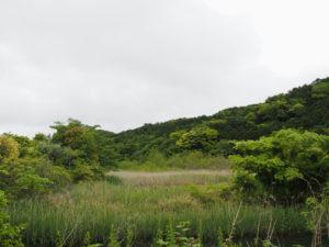 松下社付近の湿地帯(伊勢市二見町松下)