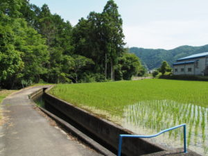 津田[土地改良区の]用水(多気町丹生)