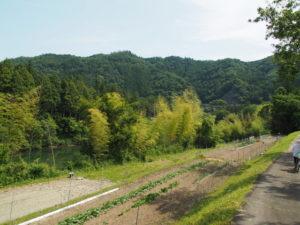 津田[土地改良区の]用水付近(多気町丹生)