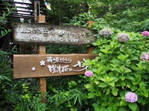 摘み草かふぇ陽光桜のかぜ(度会郡玉城町原)