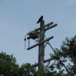 伊勢市教育委員会 松下倉庫(旧国際リゾート短期大学校)には電気が来ていない?