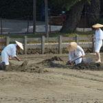 御塩浜での採鹹作業