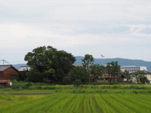 日和神社(伊勢市下野町)の遠望