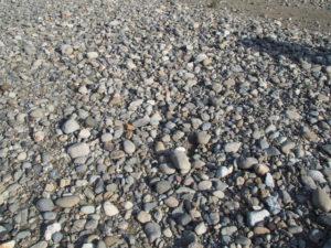 宮川大橋付近にて久しぶりの丸い石探し