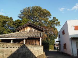 宇須乃野神社(豊受大神宮 摂社)の社叢、大クス