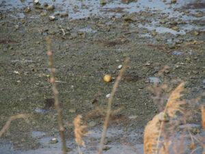 「丸い石、見つけた」