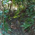 神服織機殿神社の社叢を通り抜ける「福井文右衛門 代官のおかげで掘らせた水路」