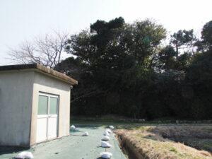 福井氏流水記功碑付近(神服織機殿神社の北東角付近)