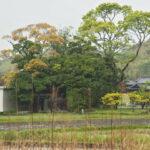 加努弥神社(皇大神宮 末社)の社叢遠望