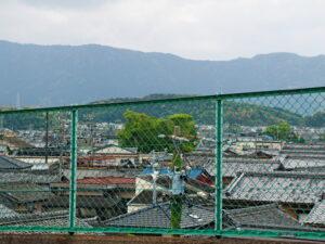 一色大橋(勢田川)から遠望した一色神社の社叢