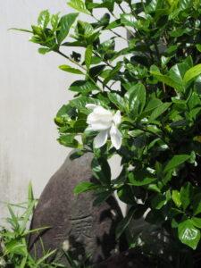 朝のぶらりで見かけた花