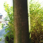 鳥居の柱には自然の落書き、御食神社(豊受大神宮 摂社)